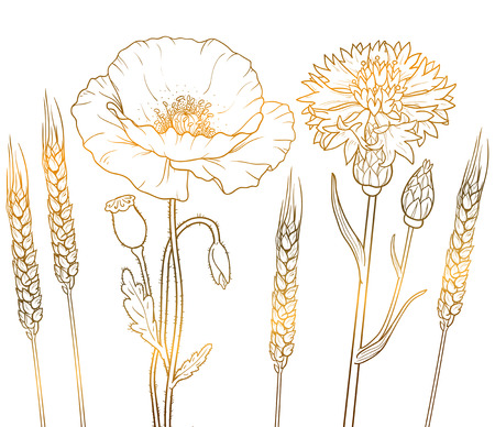 The graphics outline floristic flowers, poppy, cornflower, wheat isolated on a white background. Illustration