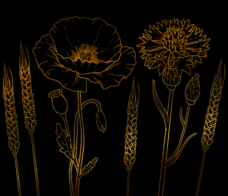 The graphics outline floristic flowers, poppy, cornflower, wheat isolated on a black background.