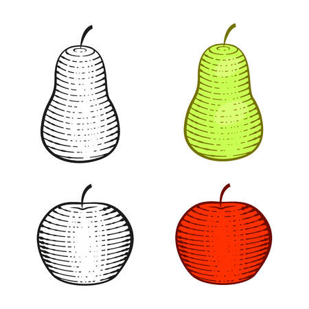 red apple and green pear graphic. contour and color. isoleted on white