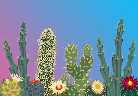 prickly: Simmple Cactus collection isolated on gradient background. Stock Photo