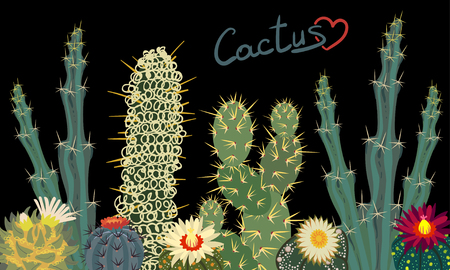 Simple Cactus collection isolated on black background