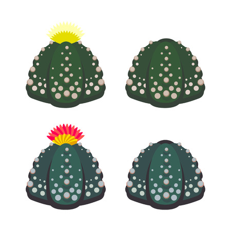 Simple Cactus collection isolated on white background