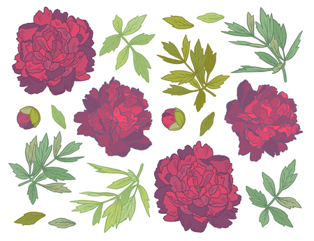 Set of Hand Drawn peony flowers and herbs vintage floral elements. Red and green decore on white background.