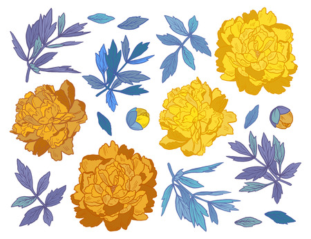 Set of hand drawn peony flowers and herbs vintage floral elements. Yellow and blue decoration on white background.