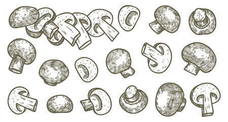 Hand drawn illustration sketch style champignon mushroom composition icons set. Vector icons for web design. Farm fresh food isolated on white background. Doodle style mushroom. Çizim