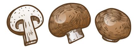 Hand drawn illustration sketch style champignon mushroom composition icons set. Vector icons for web design. Farm fresh food isolated on white background. Doodle style mushroom. Ilustrace