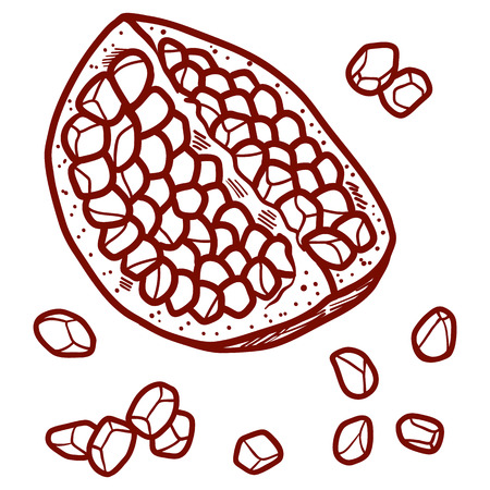 Fresh and juicy pomegranate with seeds. contour hand drawn line illustration isolated on white background. Doodle healthy food illustrations for decor design card.