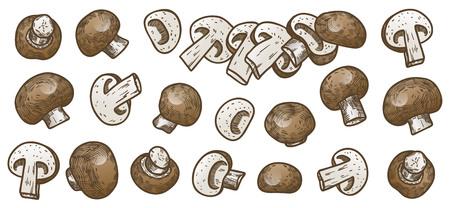 Hand drawn illustration sketch style champignon mushroom composition icons set. Vector icons for web design. Farm fresh food isolated on white background. Doodle style mushroom. Ilustração