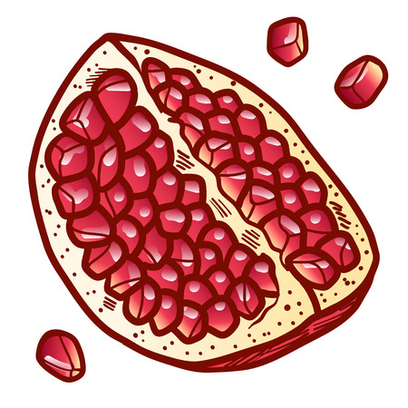 Fresh and juicy pomegranate with seeds. color hand drawn line illustration isolated on white background. Doodle healthy food illustrations for decor design card.