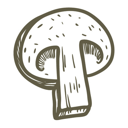 Hand drawn illustration sketch style champignon mushroom composition icon. Vector icons for web design. Farm fresh food isolated on white background. Doodle style mushroom.