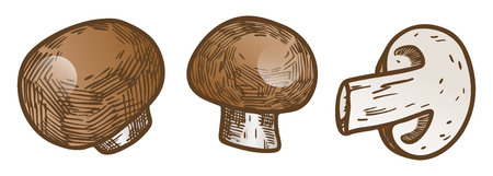 Hand drawn illustration sketch style champignon mushroom composition icons set. Vector icons for web design. Farm fresh food isolated on white background. Doodle style mushroom. Illustration