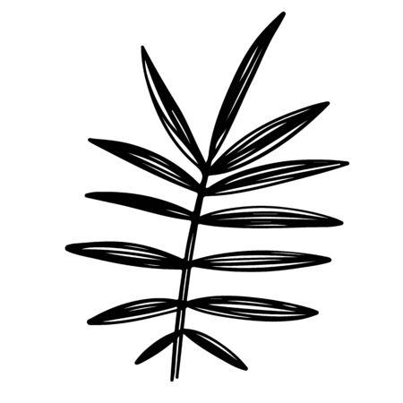 Tropical plant leaf black monochrome silhouette illustration