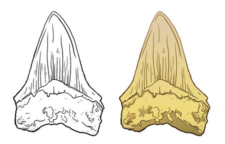 Shark megalodon tooth. Sea Life Hand Drawn line and colour Illustration. Isolated on white backgroung. Archeological discovery, paleontology symbol