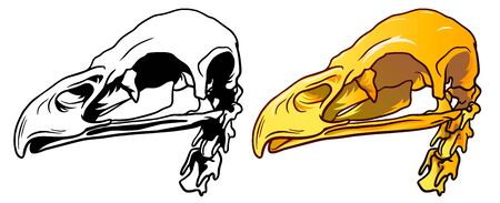 Hand Drawn Monochrome line and colour Illustration of bird skull isolated on white background, paleontology symbol. Sticker for Halloween