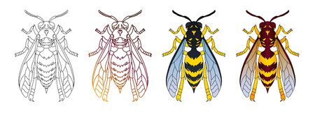 Wasp top view hand drawn illustrations set. Flying insect color and monocolor detailed linear drawings pack isolated on white background. Hornets, stinging wild animals icons collection Stock Illustration - 146916893