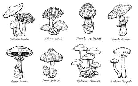 Set of Forest types of poisonous mushrooms collection, edible and non-edible boletus in retro sketch style. All elements isolated