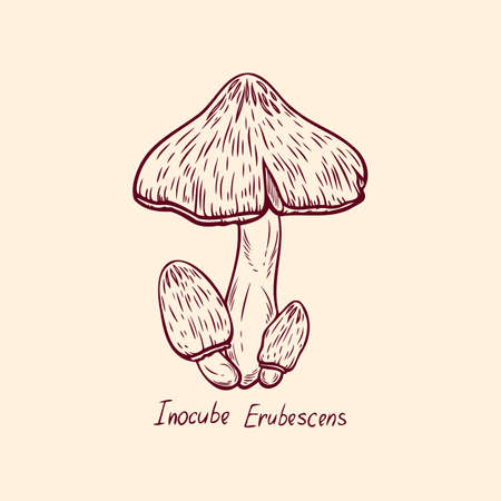 Forest poisonous mushroom Inocube Erubescens edible and non-edible boletus in retro sketch. Outline art Element isolated on white.