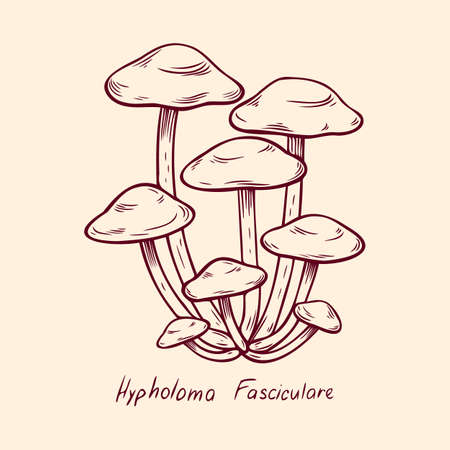 Forest poisonous mushroom Hypholoma Fasciculare edible and non-edible boletus in retro sketch. Outline art Element isolated on white.