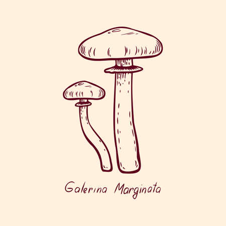 Forest poisonous mushroom Galerina Marginata edible and non-edible boletus in retro sketch. Outline art Element isolated on white.