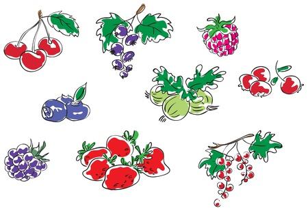whortleberry:  Berries Illustration