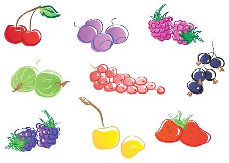 whortleberry: Set of berries