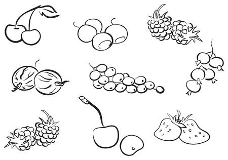 whortleberry: Set of black contour berries  Illustration