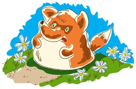 overeat: Plump fox standing on the footpath. Fox leaning tongue and laid his paws on his belly. Blue sky. The herb chamomile blossom.