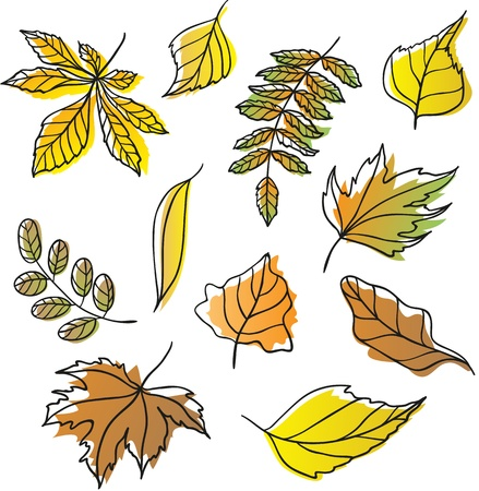 Set of fall leaves Illustration