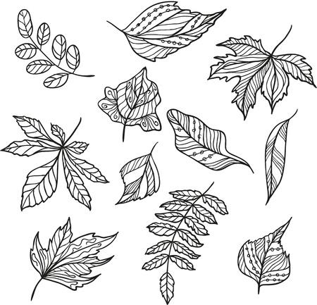 Set of  leaves Illustration