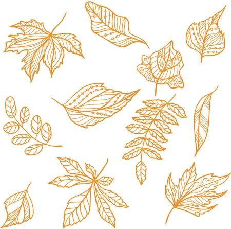 Set of fall leaves Illustration