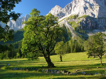 moutains: Trees und moutains Stock Photo