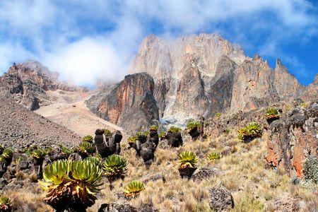 detritus: Mount Kenya, Africa