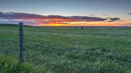 Sunrise on Cattle Pasture near Brooks