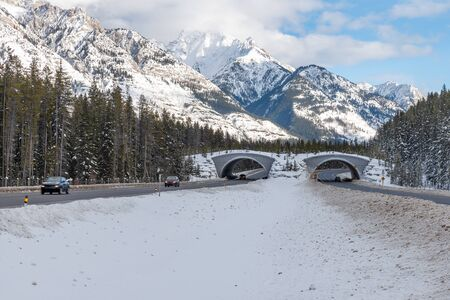 Animal Overpass on the Trans Canada Highway