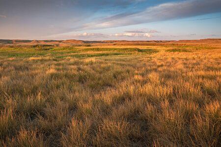 Sunrise on the Prairie Grasses at Grasslands National Park in Saskatchewan