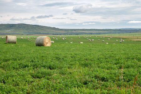 Hay Bales in a Field near Cochrane, Alberta