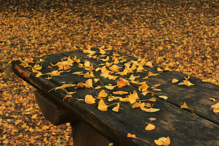 Bright yellow ginkgo leaves scattered on a wooden table