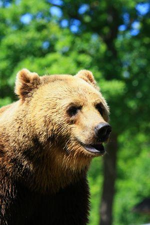 slacker: bear Stock Photo