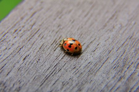 ladyfly: bug
