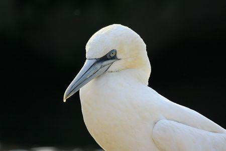 booby: booby