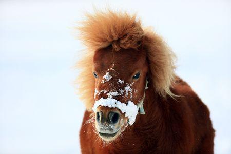pony Standard-Bild