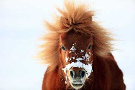 ponies: pony Stock Photo