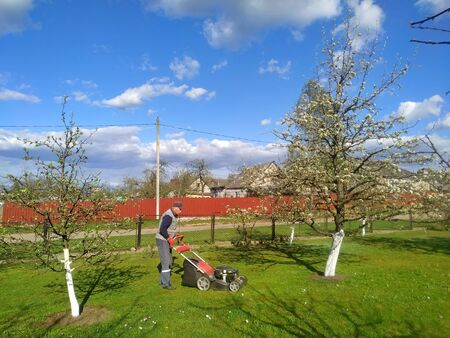 a man mows a lawn with a lawn mower in a flowering garden in early spring. Gardening Imagens