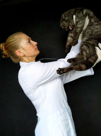 female veterinarian holding an angry hissing cat.
