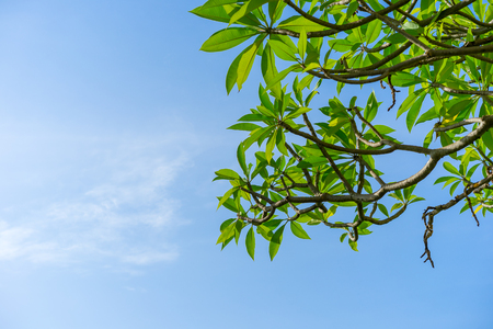 This is a picture of clear sky and trees during summer season in Thailand Stock Photo