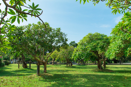 This is a picture of clear sky and trees during summer season in Thailand Zdjęcie Seryjne