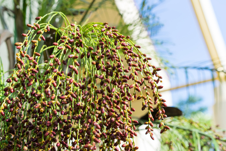 this is growing date palm tree
