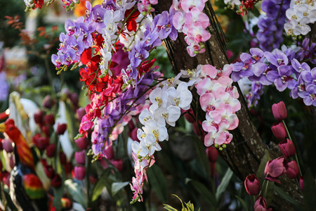 This is a picture of orchid flower which is plant in Norhern of Thailand
