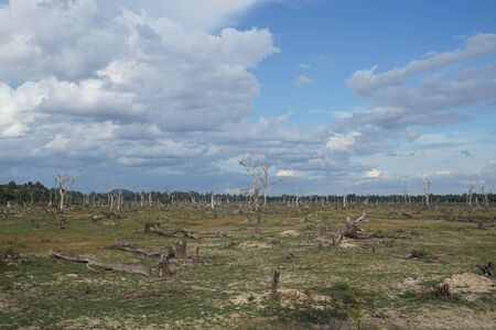 This is a picture of dead trees at way to Neak Poun Temple