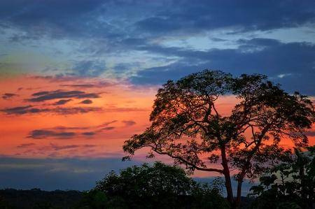 木のシルエットと黄昏